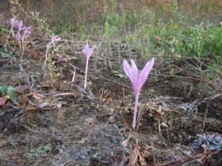 27年10月16日紫の花-thumb-550x412-3484