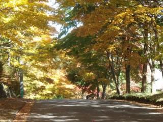 27年10月16日秋の道-thumb-550x412-3482
