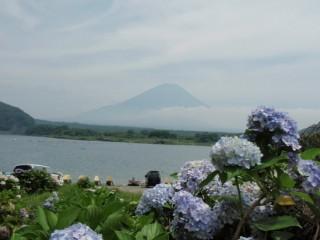 27年8月3日紫陽花と富士-thumb-550x412-3399