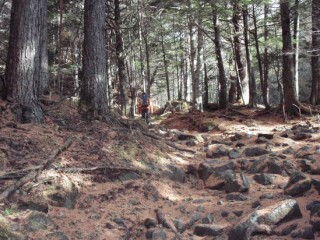 27年11月2日登山道2-thumb-550x412-3507